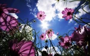 flors de tardor