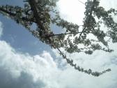 arbre vestit