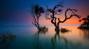 cel-terra-arbres