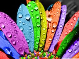 pétalos colores