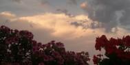 composició floral