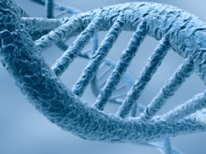 adn-cromosomas