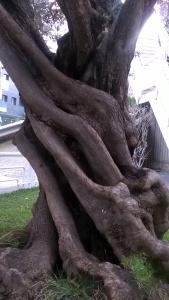 surrealismo sobre madera de olivos (2)