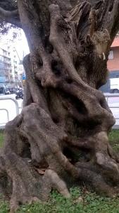 surrealismo sobre madera de olivos (3)
