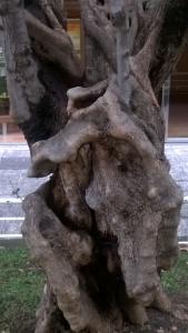 surrealismo sobre madera de olivos (7)