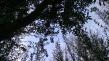 surrealismo sobre madera de olivos