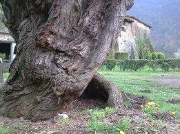 la garrotxa volcànica (Girona) (3)