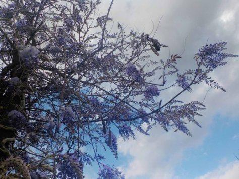 arbre liles (2)