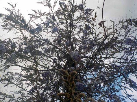 arbre liles central 2