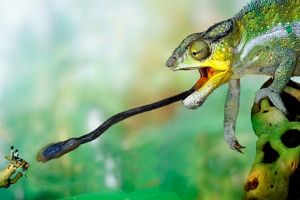 camaleon lengua